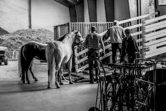 Horse Trading