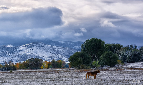 Colorado Horse and Snow 0186-72dpi.jpg